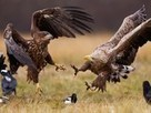 Eagle Picture -- Bird Photo -- National Geographic Photo of the Day | American landscape Photography | Scoop.it