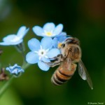Wales announces new plan to protect bees | Good News | Scoop.it