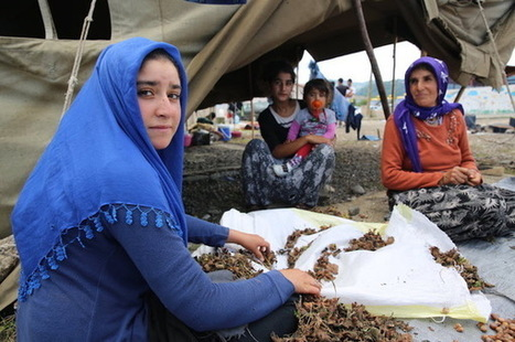 How Turkey is tackling child labor in hazelnut harvesting | The Child Labor ToolBox | Scoop.it