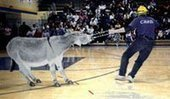 Donkey Basketball: Cruelty on the Court | Nature Animals humankind | Scoop.it
