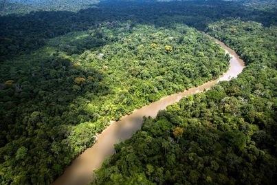 Coup d'arrêt au projet aurifère de Limonade en Guyane   Guyane : alertes mine d'or Nationale   Scoop.it