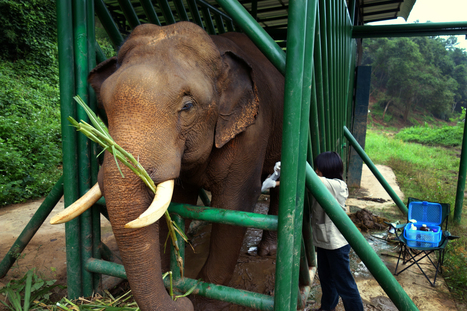No. 1 Most Expensive Coffee Comes From Elephant's No. 2 | @FoodMeditations Time | Scoop.it