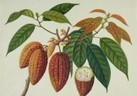 Musée gourmand du chocolat - Choco-Story | TOURISME OENOLOGIE | Scoop.it