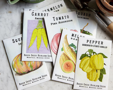 How to Shop for Veggies: Our Seed-Selection Guide - Modern Farmer | Organic Farming | Scoop.it