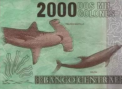 Costa Rica Augments Hammerhead Shark Conservation | CHICS & FASHION | Scoop.it