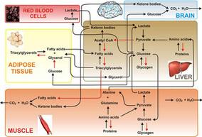 Nutrient Metabolism, Human | Learn Science at Scitable | Biochemistry | Scoop.it