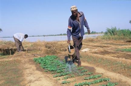 Pourquoi l'Afrique n'arrive-t-elle pas à se nourrir ?   Questions de développement ...   Scoop.it