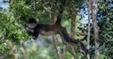 Tulum Monkey Sanctuary, in a world of its own - The Yucatan Times | Solo Travel Abroad | Scoop.it