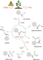 Cysteines under ROS attack in plants: a proteomics view | Plant-Microbe Interaction | Scoop.it