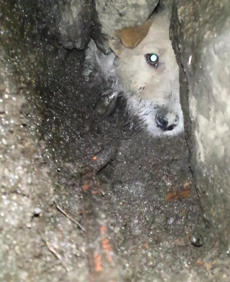 Lozère : le village se mobilise pour sauver Fifi, le chien de chasse coincé sous terre | CaniCatNews-actualité | Scoop.it