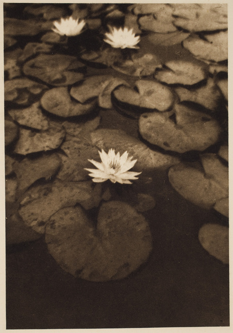Water Lillies, Alvin Langdon Coburn | Photography Now | Scoop.it