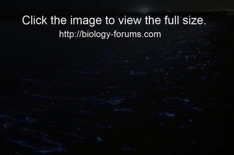 Bioluminescence in Japan - Biology Forums Blog | Bioluminescence | Scoop.it