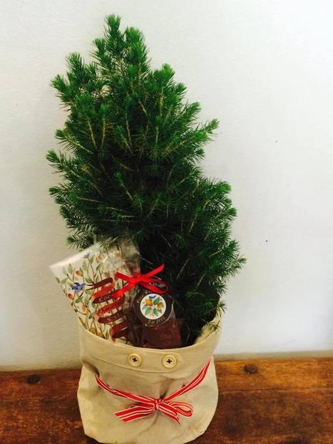 Send Live Christmas Tree-Florist Sydney   Fashion, Beauty & Flowers   Scoop.it