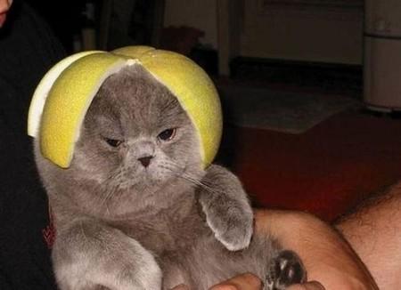 14 Lemon Heads Grumpier Than Grumpy Cat | Is your Network Secure? | Scoop.it