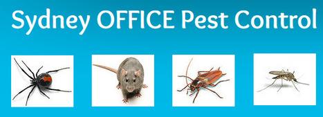 Sydney Office Pest Control Services | Commercial Pest Control | Scoop.it