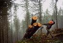 Jobs vs. environment at Oregon legislature   Timberland Investment   Scoop.it
