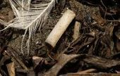 Kicking cigarette butts out of California is aim of bill | Sustain Our Earth | Scoop.it