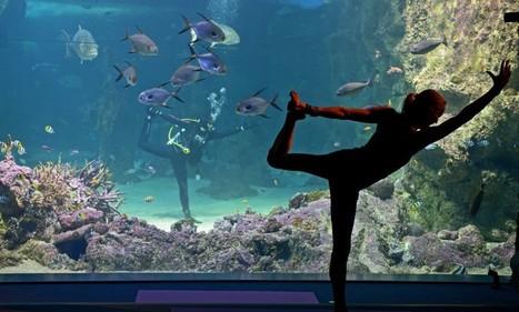Sydney, yoga sott'acqua: il saluto al sole si fa dentro l'acquario - La Repubblica | Consigli per il Stare Bene | Scoop.it
