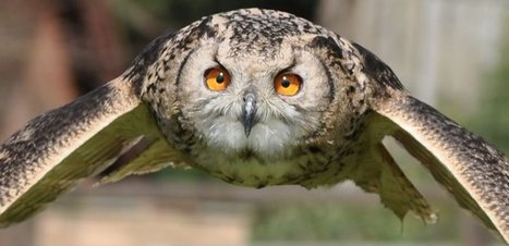 Wickedly Wise Hootsuite Updates | Hootsuite | Scoop.it