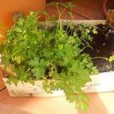 Un Potager Gratuit et Facile à Faire ! | pour mon jardin | Scoop.it