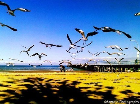 A Conversation with Sea Gulls | Serendipitous Delight | Scoop.it