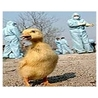 Avian influenza virus A(H7N9)