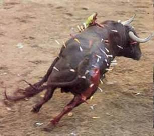 El país de la fiesta y el maltrato animal - El Biocultural   La ecocolumna   Scoop.it