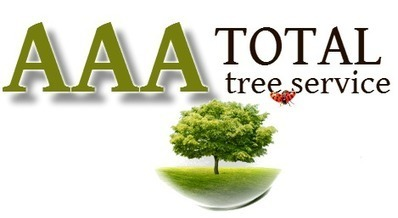 When you need tree removal in Brentwood TN, contact AAA Total Tree Service! | AAA Total Tree Service | Scoop.it