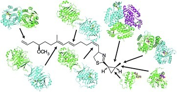 Insights from the sea: Structural biology of marine polyketide synthases   Power of Protein Crystal Structures   Scoop.it