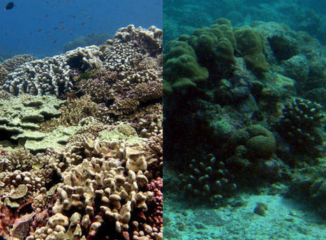 Rethinking the reef | Marine | Scoop.it