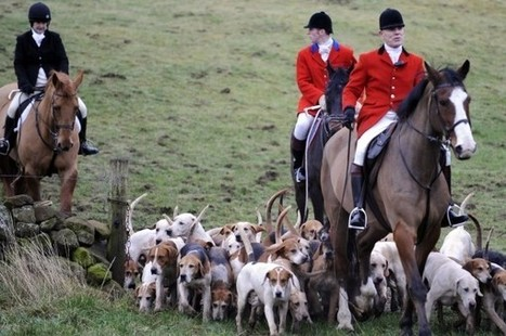 Campaigners call for tougher law as fox-hunts still go on despite ban | My Scotland | Scoop.it