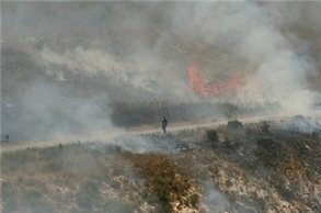 PA official: Settlers burn 300 olive trees near Nablus | Occupied Palestine | Scoop.it