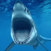 Sharks Dive By the Moon : DNews | Seahorse Project | Scoop.it