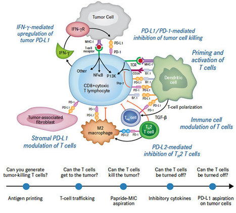 Immunotherapy for Multiple Myeloma, Past, Present, and Future: Monoclonal Antibodies, Vaccines, and Cellular Therapies - Online First - Springer | Host Cell & Pathogen Interactions | Scoop.it