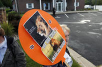 Plight of African lions persists 1 year after Cecil killing | Wildlife News | Scoop.it