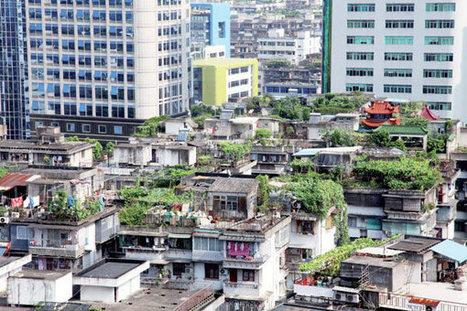 International Green Roofs policies | National & International Environmental Management | Scoop.it