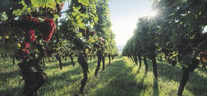 Les Chiffres clés du tourisme dans  le vignoble alsacien | Le site www.clicalsace.com | Scoop.it