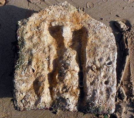 New Archaeological Discoveries in the Sea off Trapani | Archaeology News | Scoop.it