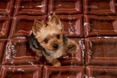 Bunny's Blog: Chocolate, Dogs and Valentine's Day | Pet News | Scoop.it