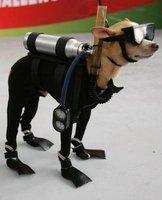 Mondex the Scuba Dog   ScubaObsessed   Scoop.it