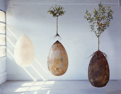 Not a topic one likes to talk about, but still: Forget Coffins – Organic Burial Pods Will Turn Your Loved Ones Into Trees | MAREMMA MAGAZINE | Scoop.it