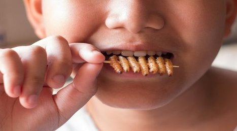 Creepy Crawlies: The Health Benefits of Eating Bugs & Why We Should Do It More Often | Entomophagy: Edible Insects and the Future of Food | Scoop.it