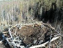 EENet » Looduskaamerad | Noticias de Ciencias | Scoop.it