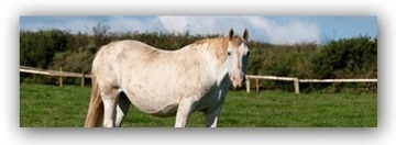 Pregnant Horse Nutritional Dangers and a Solution | Horse Care | Scoop.it