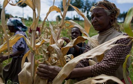 Biomass in Africa: EU funds electrification - Bioenergy Crops   Bioenergy Crops   Scoop.it