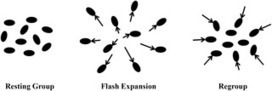 Flash Expansion Threshold in Whirligig Swarms | Social Foraging | Scoop.it