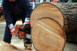 Hire reliable tree contractor - Potters Tree Service | Potters Tree Service | Scoop.it