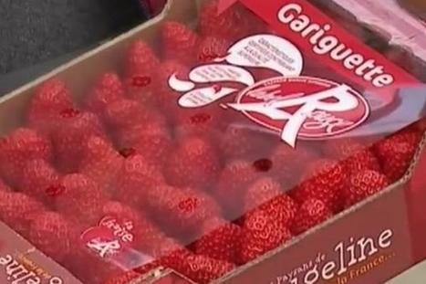 ROUGELINE : les fraises GARIGUETTE sont déjà arrivées | Maraichage-Horticulture | Scoop.it