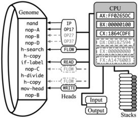 Understanding Evolutionary Potential in Virtual CPU Instruction Set Architectures | Social Foraging | Scoop.it