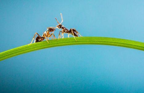 Avis d'experts | Les Fourmis, Des Insectes Si Proches De Nous! | Science Actualités | Scoop.it
